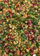 Aslan Linzen Salade Meze Tapenade per 100 Gr