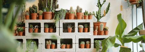 Planthood